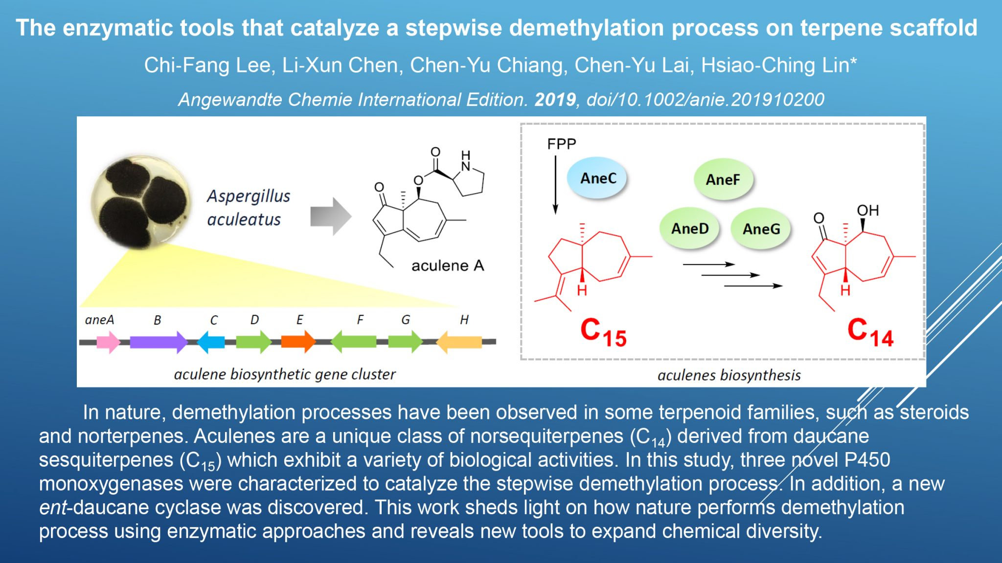 The Biosynthesis of Norsesquiterpene Aculenes Requires Three Cytochrome P450 Enzymes to Catalyze a Stepwise Demethylation Process