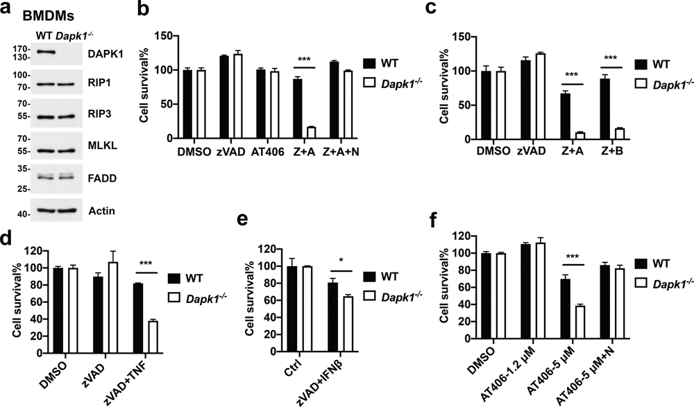 Tumor Suppressor Death-Associated Protein Kinase 1 Inhibits Necroptosis by p38 MAPK Activation
