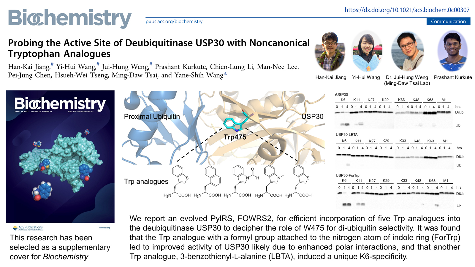 Probing the Active Site of Deubiquitinase USP30 With Noncanonical Tryptophan Analogues