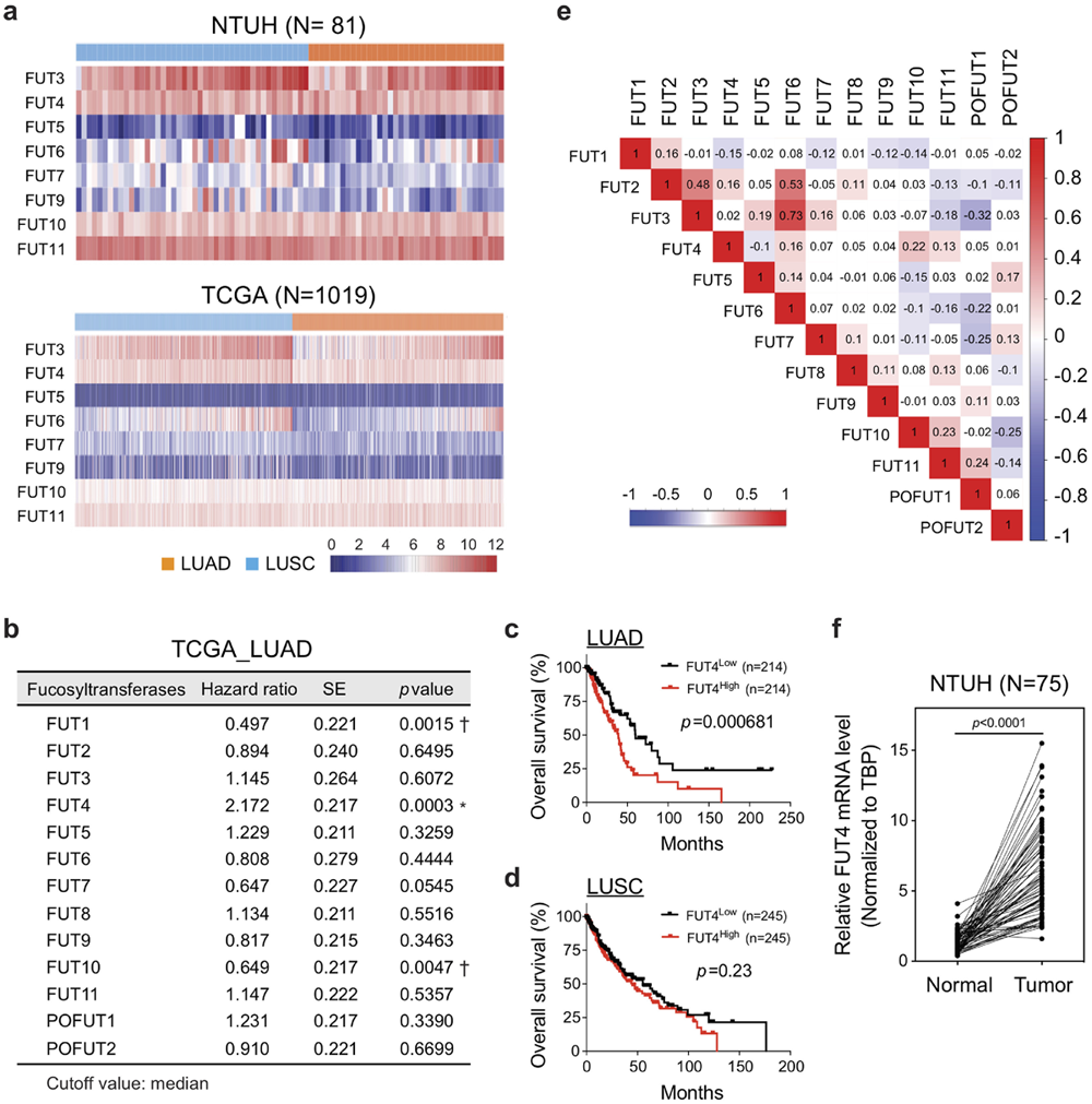 Fucosyltransferase 4 shapes oncogenic glycoproteome to drive metastasis of lung adenocarcinoma